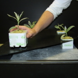 GT901 NFT Hydroponic Growing System