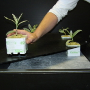 GT604 NFT Hydroponic Growing System