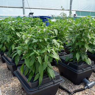 Nutriculture Rush Dwc Systems Hydroponics Blog