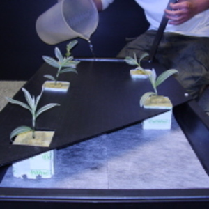 MD200 NFT Hydroponic Growing System