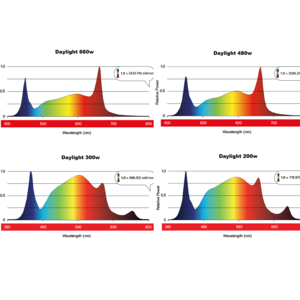 Maxibright Daylight LEDs spectral output
