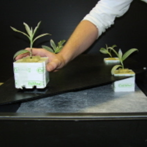 GT424 NFT Hydroponic Growing System