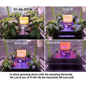 Hacienda LED plant growth