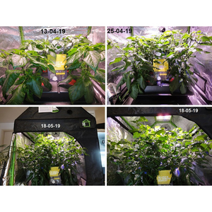 Hacienda COB LED Grow Lights